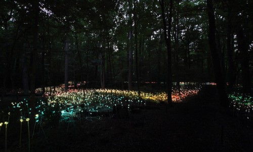 10_Stunning Light Installations by Bruce Munro