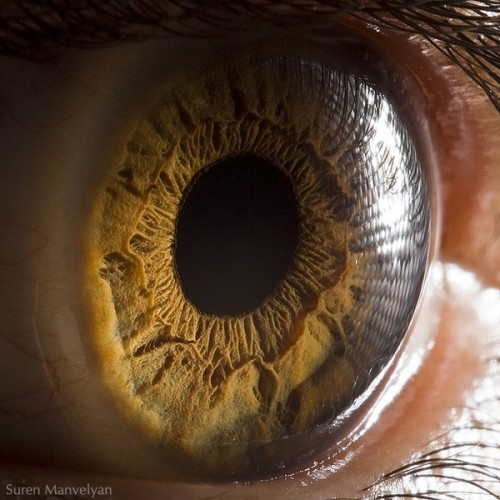 2_Human Eye Close Up