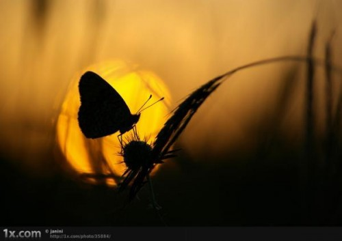11_Sunset Butterfly