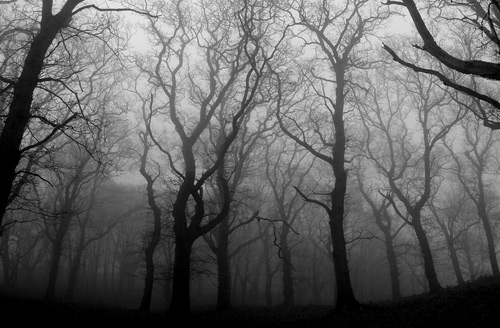 22_Woodland Mist
