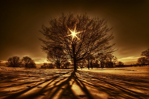 26_Tree Of Light