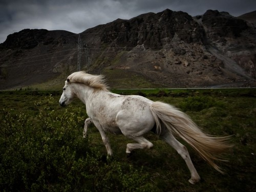 2_Horse Near Mountains