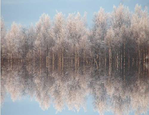 33_Forest reflection