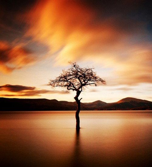 58_That Tree at Milarrochy Loch Lomond