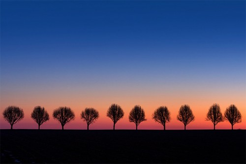 19_Trees Watching Sunrise
