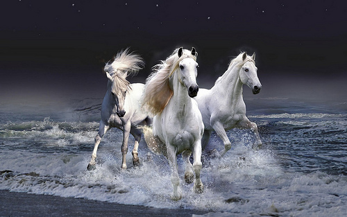 14_The Best Top Desktop Horse Wallpapers