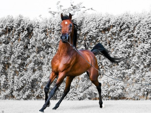 7_Beautiful Brown Horse
