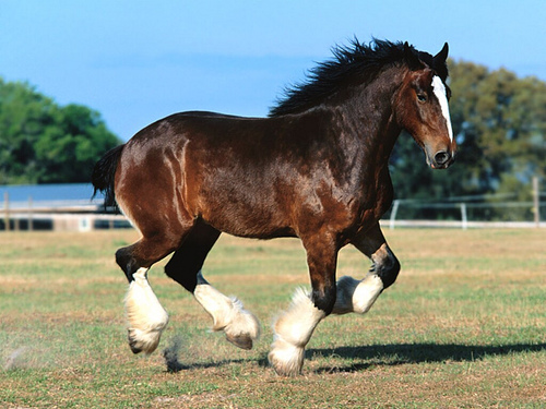 8_Free Desktop Wallpapers Horse