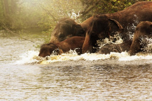 Elephants of The River