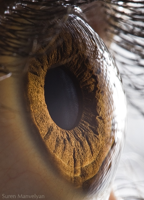Absolutely Stunning  Examples of Human Eye Photography