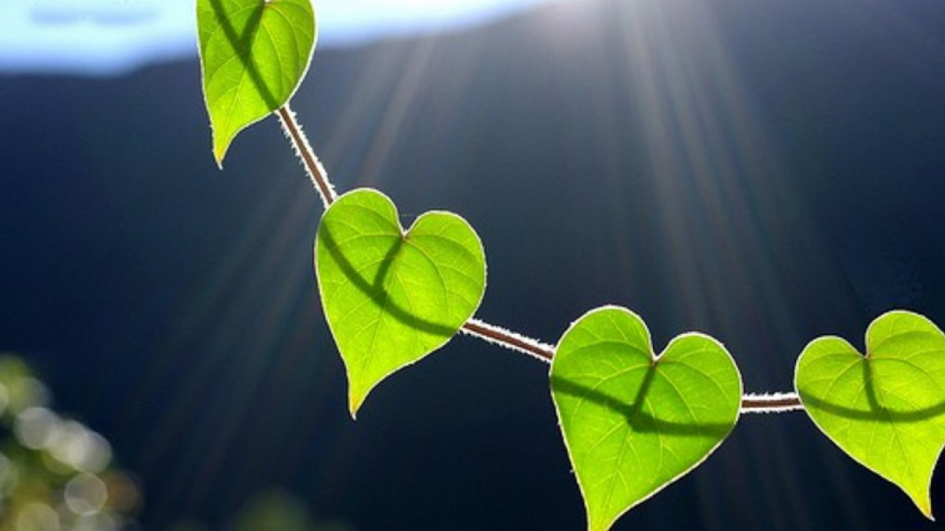 40 breathtaking heart shaped wallpapers designcoral - Love nature wallpaper hd ...