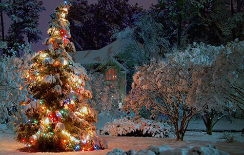 Winter Christmas Tree Wallpaper
